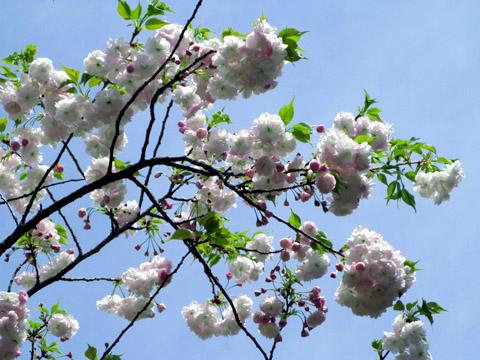 02-100421flower.jpg