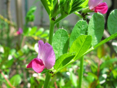 03-100421flower.jpg