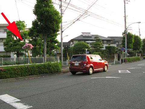 090509ode001_tsutsuji.jpg