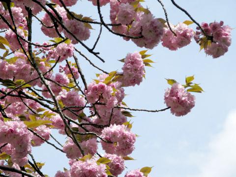 01-100421flower.jpg