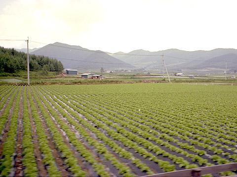 09-shinshu018.jpg