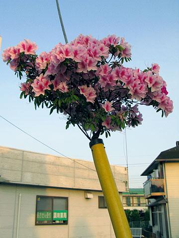 090509ode003_tsutsuji.jpg